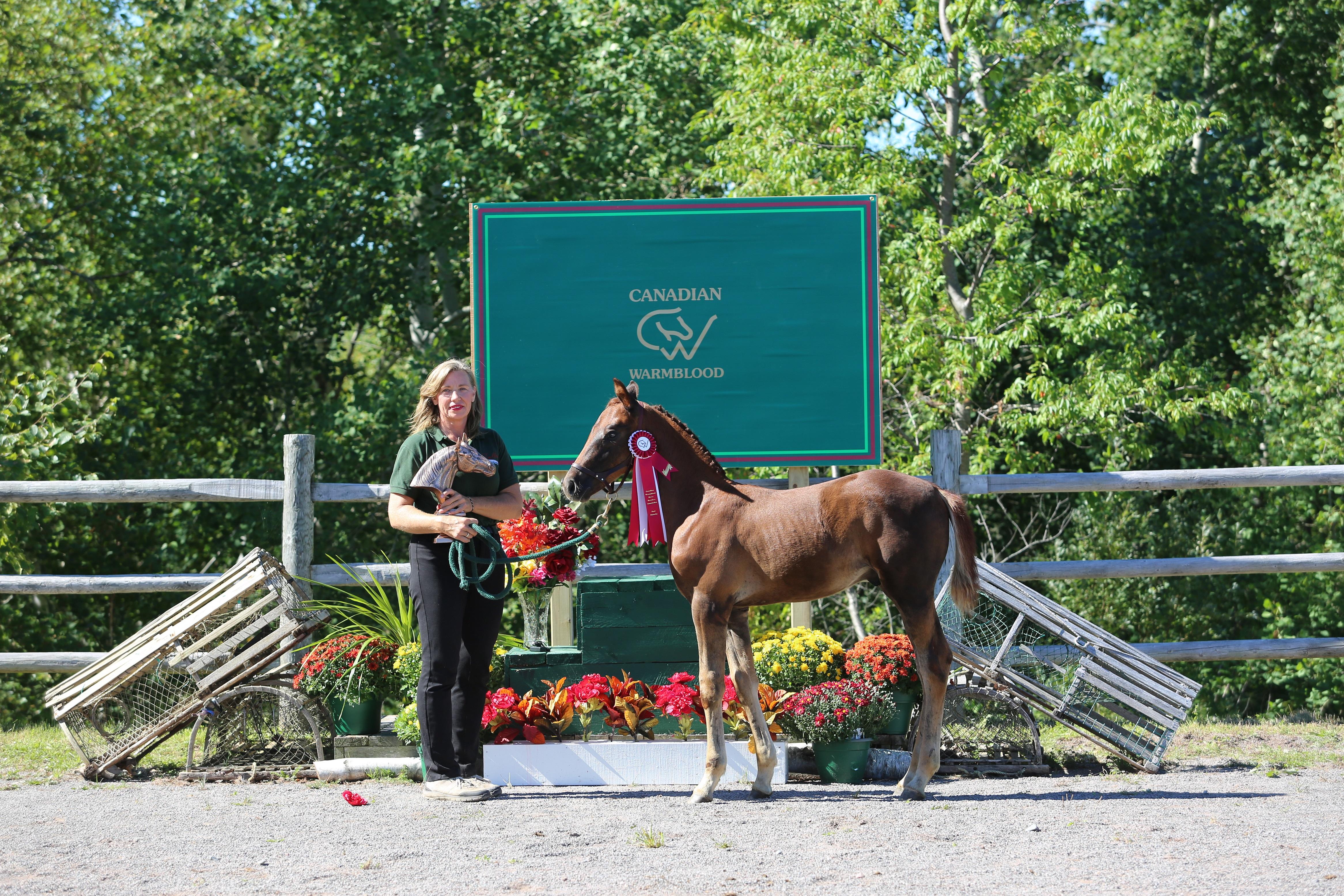 CWHBA SSA Foal Futurity Winner FPH Maxwelton/Viva Voltaire/Jumars